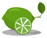Lime in green color vector or color illustration